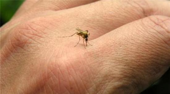 Tránh Muỗi Đốt