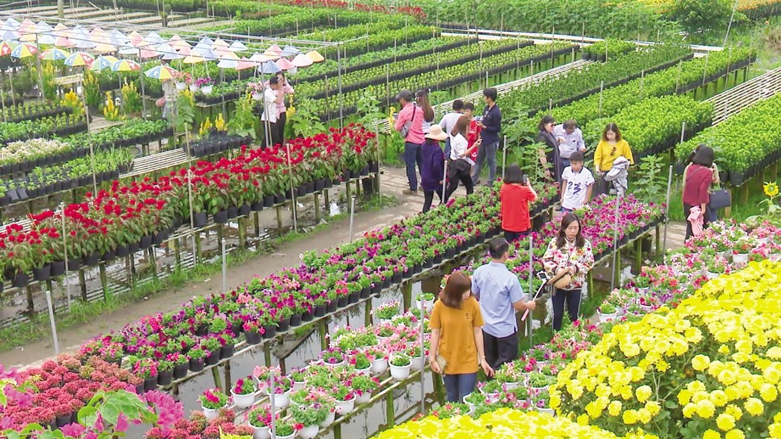Làng Hoa Sa Đéc nhộn nhịp với hàng ngàn loài hoa