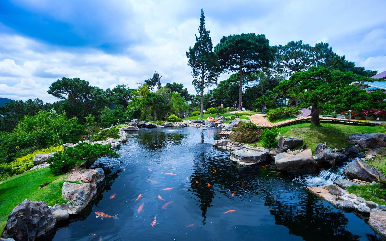 Tìm hiểu về hồ nuôi cá Koi