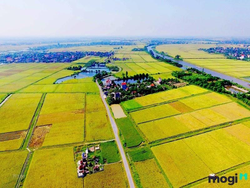 Hiểu đơn giản, đất thổ canh chính là đất nông nghiệp